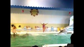 Япония, Отару, Otaru Aquarium, шоу дельфинов часть 1(, 2016-02-24T08:13:53.000Z)
