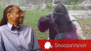 failzoom.com - When a Silverback Attacks in SnoopaVision