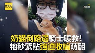 奶貓倒路邊騎士暖救牠秒緊貼強迫收編萌翻 @東森新聞 CH51