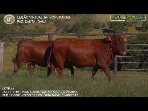 LOTE 058