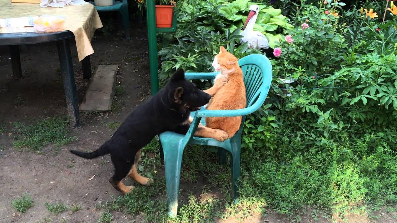 знакомство кота и щенка