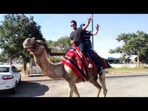 Riding a camel. The Judean desert near Jericho and the Dead Sea, Israel