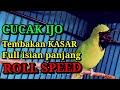 Cucak Ijo Gacor Full Tembakan Kasar Roll Speed Full Isian Kasar Panjang Suara Pedas  Mp3 - Mp4 Download