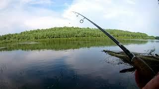 Ловля  отводным поводком Чернигов р.Десна