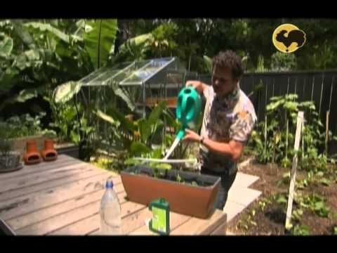 Огород без хлопот - Выращивание зелени, приготовление компоста ( 4 серия )