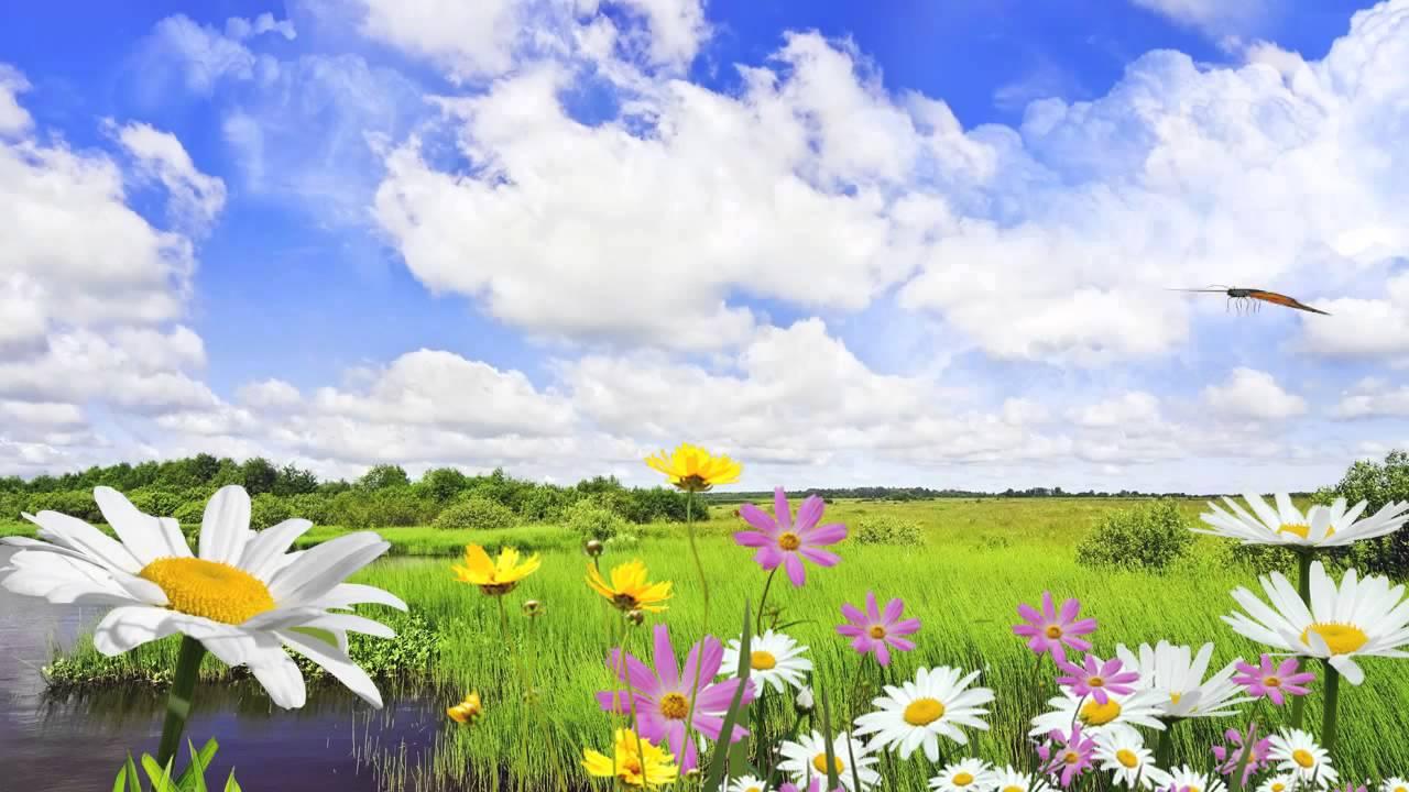 Фото поля с цветами