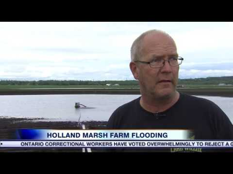 Video: Deluge puts Ontario crops in jeopardy