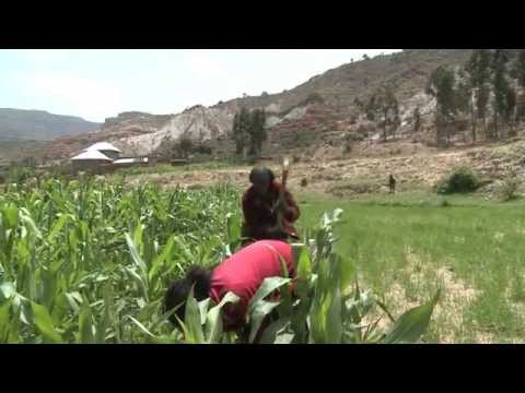 Thirsty Land – How Ethiopian Farmers Harvest Water