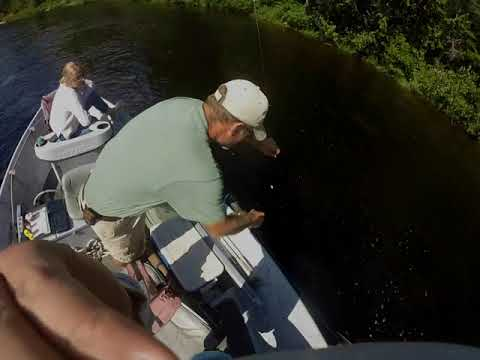 Fly Fishing The Penobscot River (8-23-17)