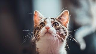Как сделать кошке ветеринарный паспорт