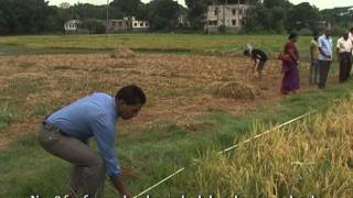 Yield Estimation Procedure of Rice in Bangladesh produced by BBS