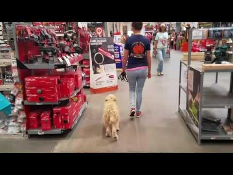 """5 Month Old Goldendoodle """"Bailey"""" Before/After Video 