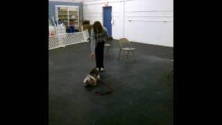 Mojo Training At Cudahy Kennel Club
