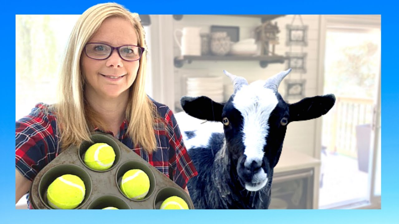 Pet  GOAT and hidden treat challenge part 2!
