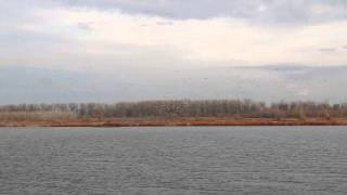 Waterfowl at Clarence Cannon refuge in Missouri