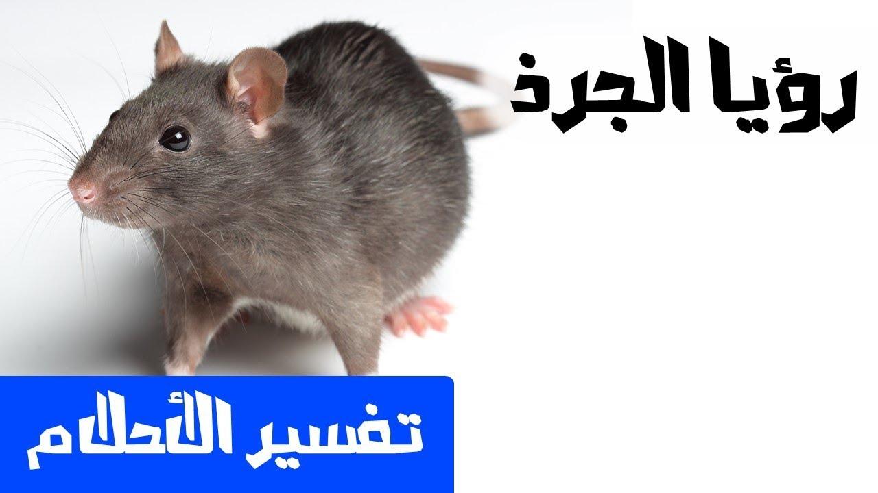 الجرذ في الحلم تفسير الاحلام لابن سيرين Mr Info