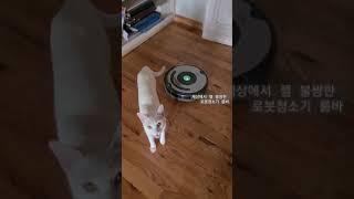 세상에서 제일 불쌍한 로봇청소기 룸바. 냥아치 고양이 …