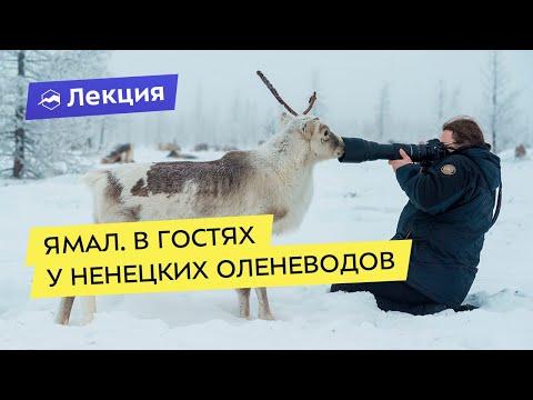 Приключения на Ямале: в гостях у ненецких оленеводов