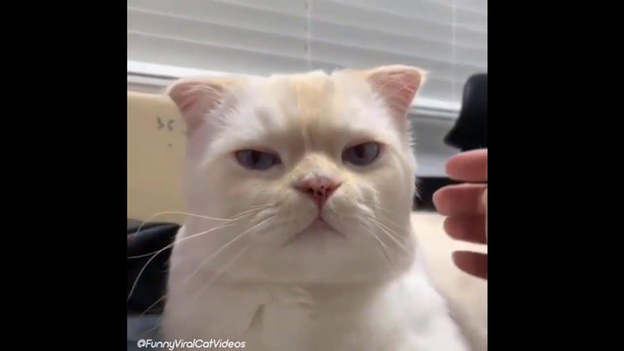 Kompilasi Video Kucing Lucu Dan Imut Sedunia Yang Warna Putih Paling Menggemaskan Youtube
