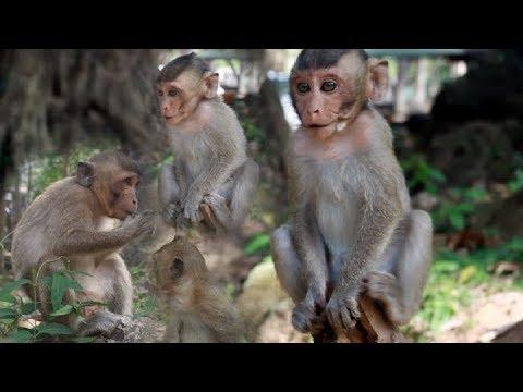 cute-cute-baby-monkeys-playing-happy,-poor-baby-monkeys-playing-alone-,cute-monkeys