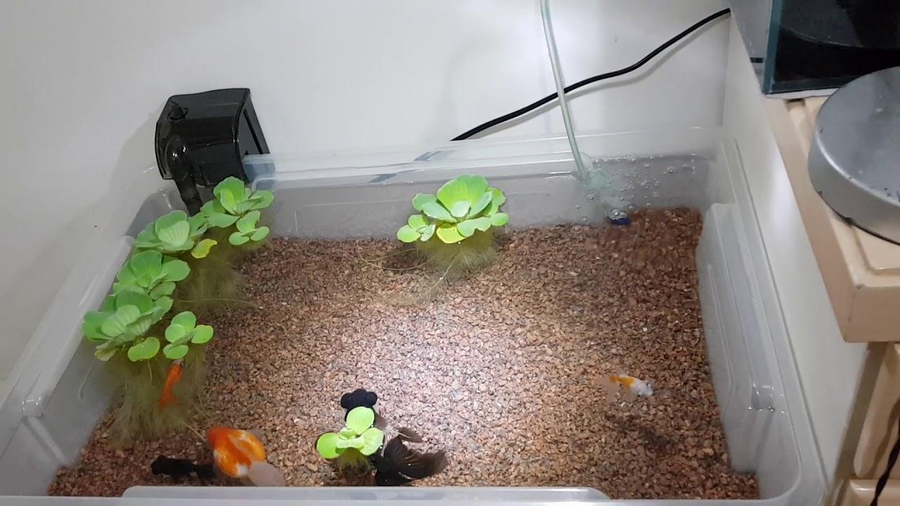 diy indoor pond youtube