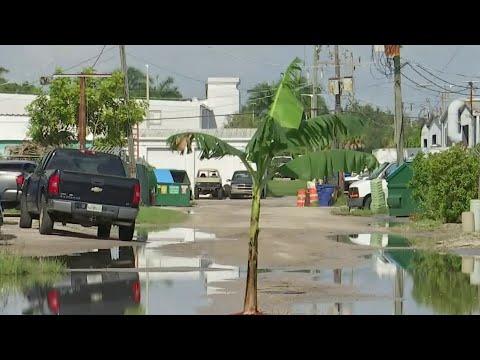 Banana-tree-planted-in-Florida-pothole