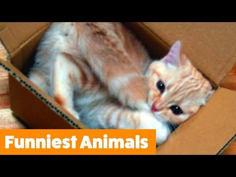 1 hour of the Funniest Animals | Funny Pet Videos