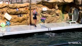 Шоу дельфинов в дельфинарии