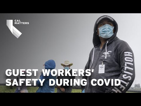 California guest workers face COVID safety crisis