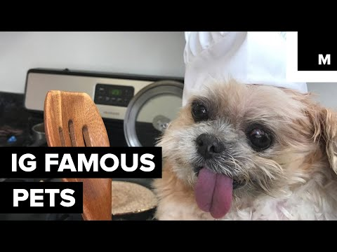 The Cutest, Most Instagram-Famous Pets of the Internet