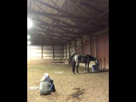 Video viral   La emotiva reacción de un caballo al ver a su dueña ?llorando?  impactó a millones en las redes sociales   OFF-SIDE   DEPOR