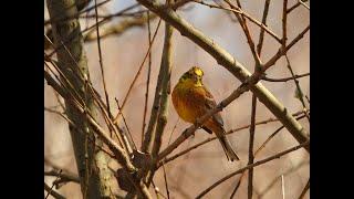 Природа в апреле. На окраине нашего поселка.Красивая птица.