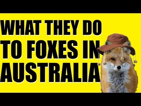 Fieldsports Britain - What they do to foxes in Australia (episode 194) Travel Video