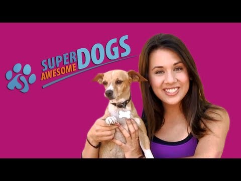 How to Avoid Choosing the Wrong Dog | Super Awesome Dogs | Dog Training with Faris Jaclyn