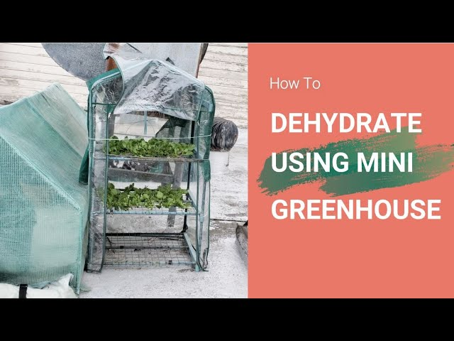 How to Dehydrate Using a Mini Greenhouse