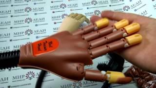 Тренировочная рука для школ обучения мастеров маникюра.