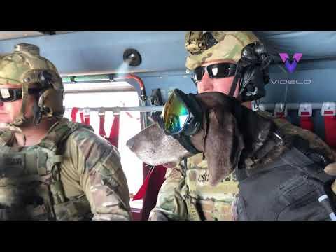Perros militares lanzándose en paracaídas desde un avión