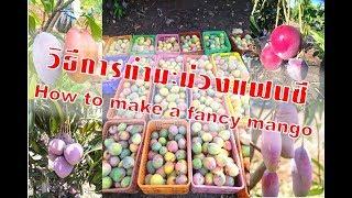 การทำมะม่วงแฟนซีด้วยวิธีฝากยอด (Making fancy mango with a deposit method)