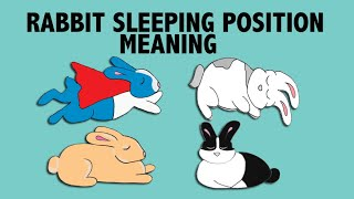 What Your Rabbit's Sleeping Position Reveals about their Personality!