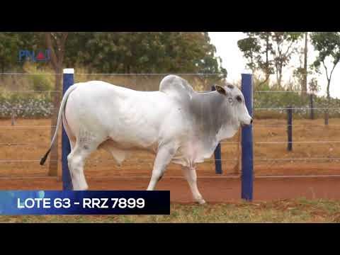 LOTE 63 - RRZ 7899 - NELORE