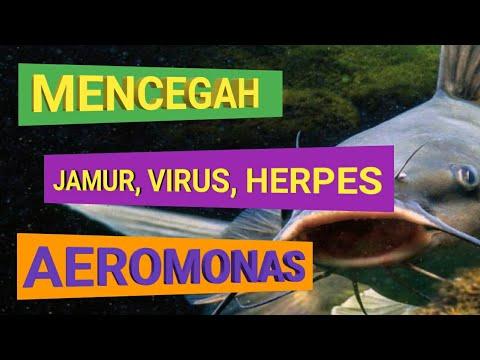 cara-membuat-ramuan-herbal-untuk-lele