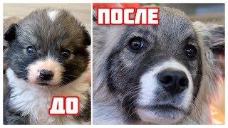 Брошенный щенок 4 месяца спустя. Малыш из клиники.