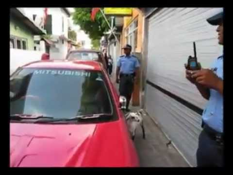 Maldives Wildlife Security Service?