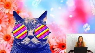 Прикольные картинки.Котов и кошек