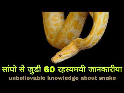 सांपो से जुडी 60 रहस्यमयी जानकारीया।। जाने सांपो के बारे मे सब कुछ all knowledge about snake thumbnail