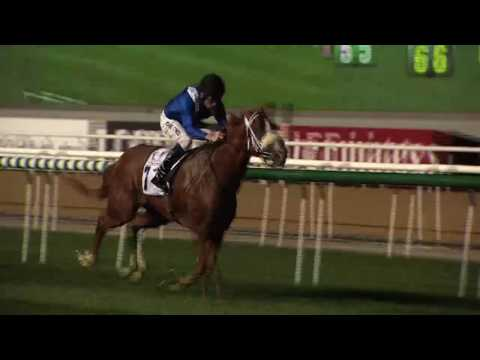 #DubaiRacing Doug Watson on plans for his Carnival horses