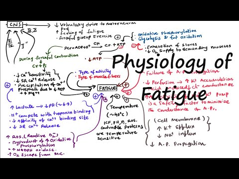 Causes Of Muscle Fatigue Physiology Of Muscle Fatigue Peripheral Fatigue Central Fatigue Youtube