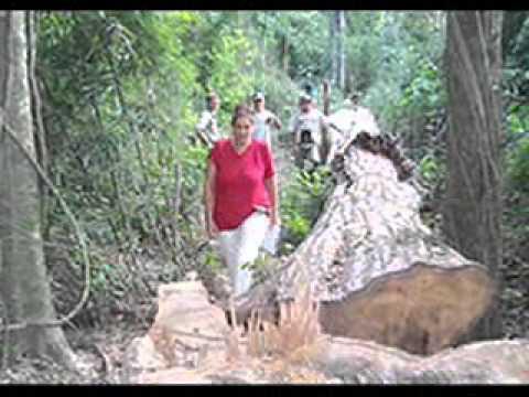 Maldita Deforestación
