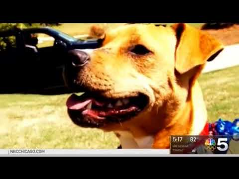 National Spoil Your Dog Day — WMAQ 08 10 2017