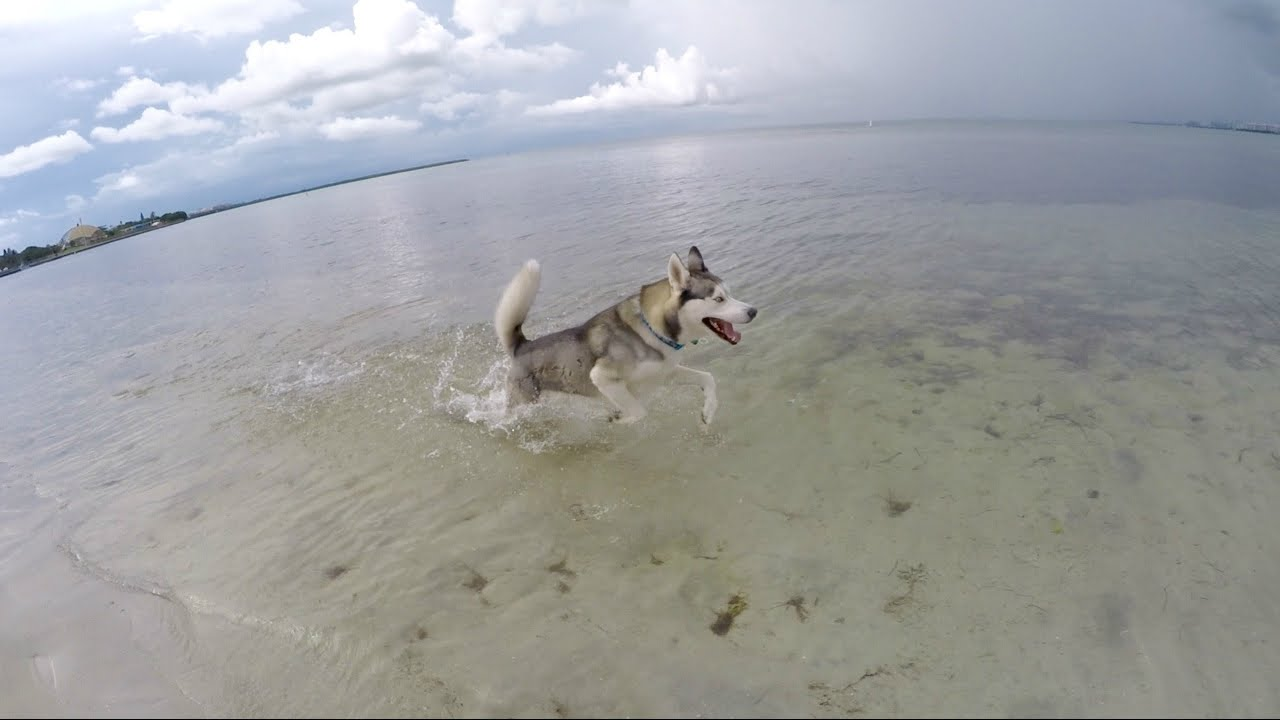 GOHAN RUNNING AT THE BEACH!